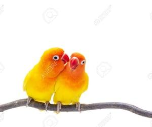 animals, birds, and yellow image