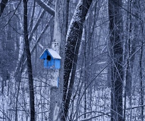 bird, house, and winter image