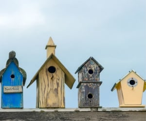 bird house, house, and birds image