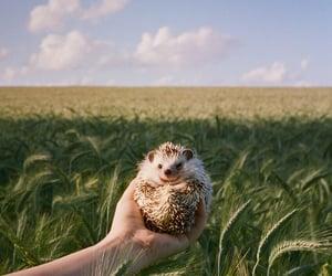 animal, nature, and photograhy image
