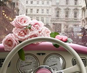 rose, pink, and car image
