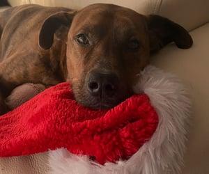 dog, rescue, and eyes image