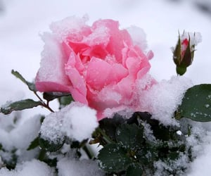 flowers, beautiful, and frost image