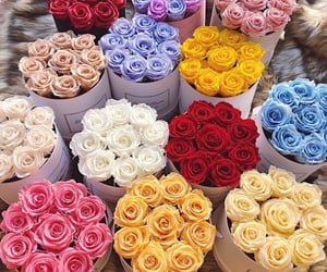 flowers, colorful, and rose image