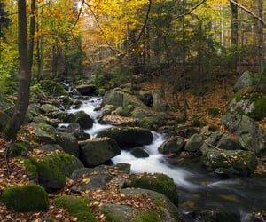 autumn, forest, and scenery image