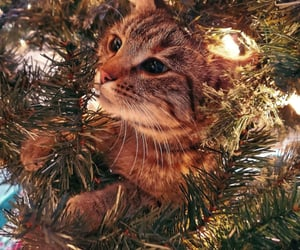 adorable, cat, and christmas image