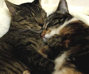cats, couple, and Relationship image
