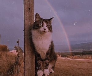 cat, animal, and rainbow image