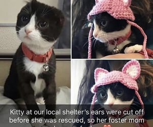 adorable, cats, and ears image
