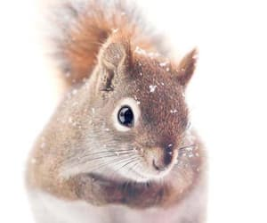 squirrel, cute, and snow image