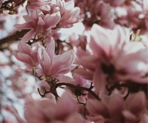 background, bloom, and blooming image