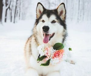 snow, winter, and cute dog image