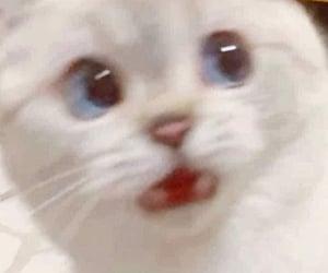 cat, animal, and meme image