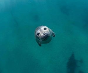 nature, animal, and seal image