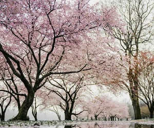 nature, pink, and tree image