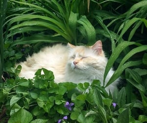 cat, animal, and green image
