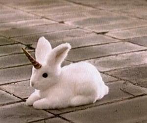 conejo, rabbit, and white image