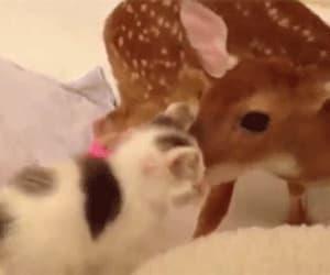 animal, anime, and deer image