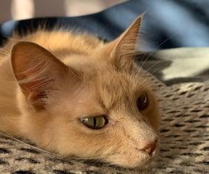 adorable, cat, and closeup image