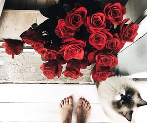 cat, roses, and flowers image