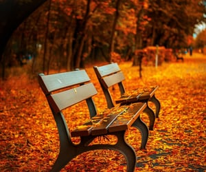 autumn, benches, and foliage image