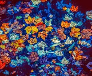 autumn, colorful, and mood image