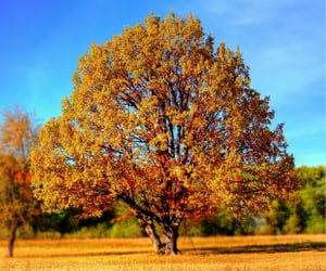 country side, fall, and foliage image