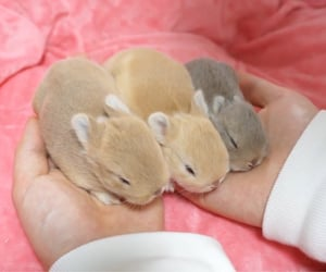 animals, baby bunny, and bunny image