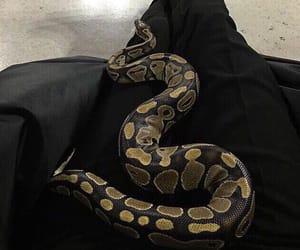 Animales, serpientes, and animals image
