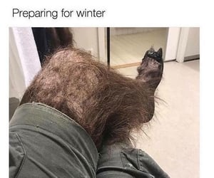 funny, winter, and hair image