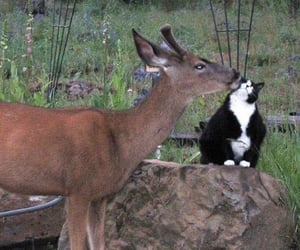animals, cat, and deer image