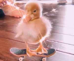 animal, duck, and cute image