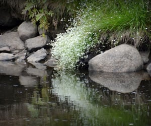reflection, weeds, and rocks image
