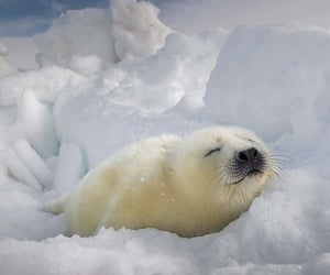 Animales, lindo, and naturaleza image