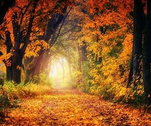 autumn, haze, and landscape image