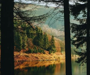 autumn, forest, and photography image