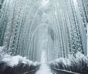 bamboo, east, and snow image