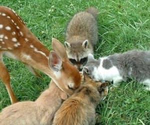 animal, cat, and deer image