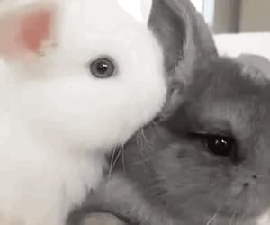 animals, bunnies, and gif image