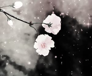 anime, flowers, and gifs image
