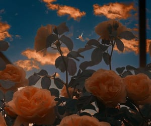 aesthetic, evening, and flowers image