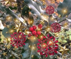 evergreen, feuer, and holly image