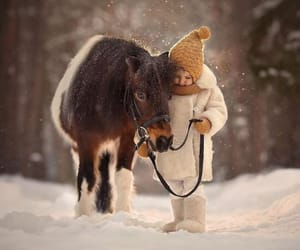 animals, photgraphy, and cute image
