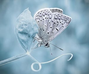 butterfly, blue, and white image