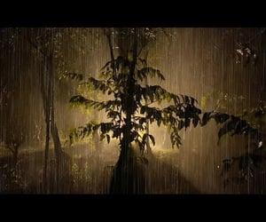 rain, video, and heavy rain image
