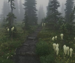 forest, aesthetic, and flowers image