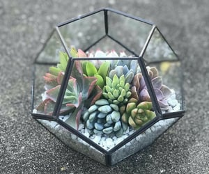 green, plants, and succulents image