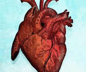 anatomy, heart, and sketches image