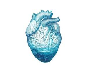 anatomy, beach, and heart image
