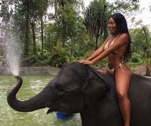 elephant, animal, and summer image